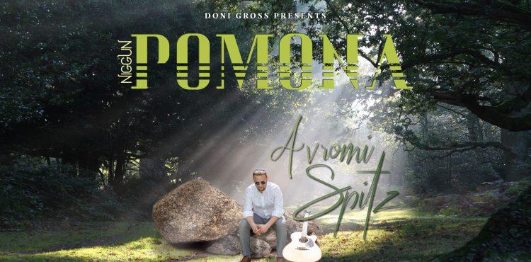 Niggun Pamona Avrumi Spitz Cover